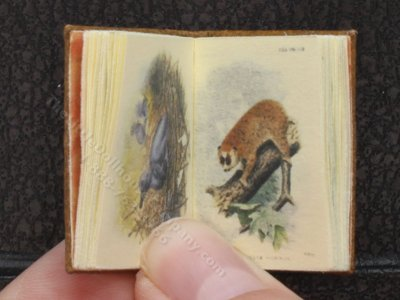 Miniature Book: 'Zoological Society of London'