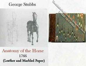 Dollhouse Miniature Anatomy of the Horse Book