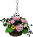 Pink Carnations in Hanging in Basket